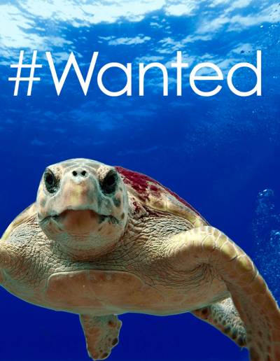 PN_Wanted_Turtle