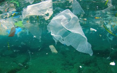 Plastic Pollution in the Ocean, Common Causes & Ways to Reduce – Plastic Collective