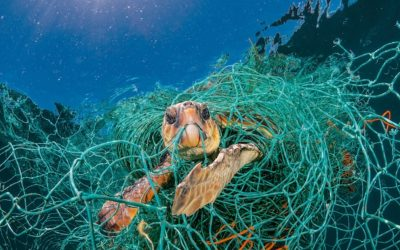 How are Marine Megafauna Impacted by Plastic Pollution?